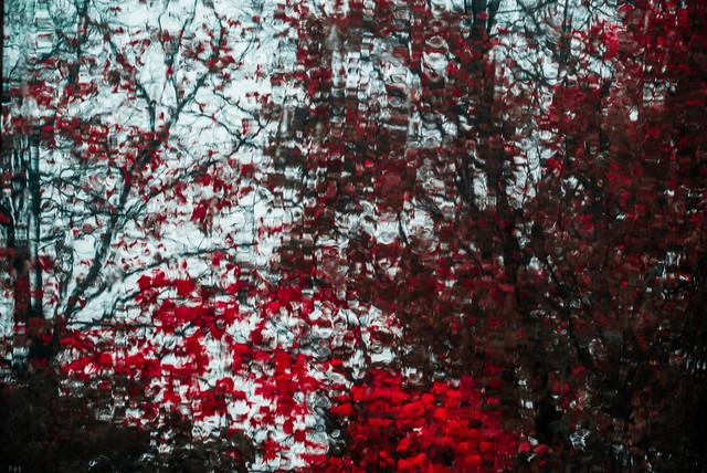 blutiger Herbst - Fineart photography by Sascha Hoffmann-Wacker