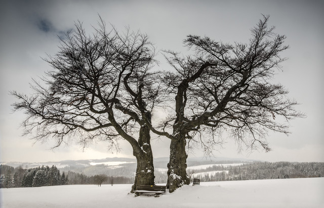 Solitary Treescape # 3 - Fineart photography by Heiko Gerlicher