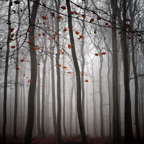 The Beauty Of November - Fineart photography by Carsten Meyerdierks