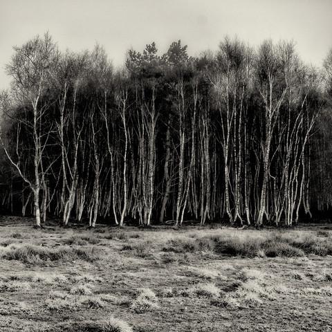 Baum #10 - Fineart photography by J. Daniel Hunger
