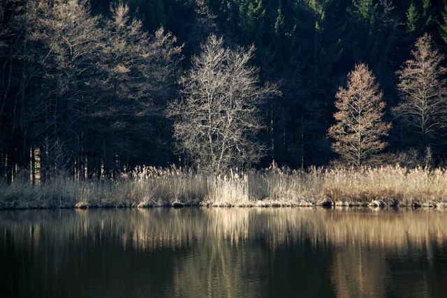 Ufer - Fineart photography by Ernst Pini