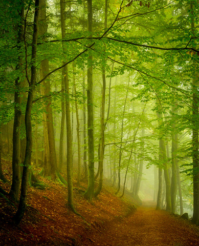 Fog - Fineart photography by Torsten Muehlbacher