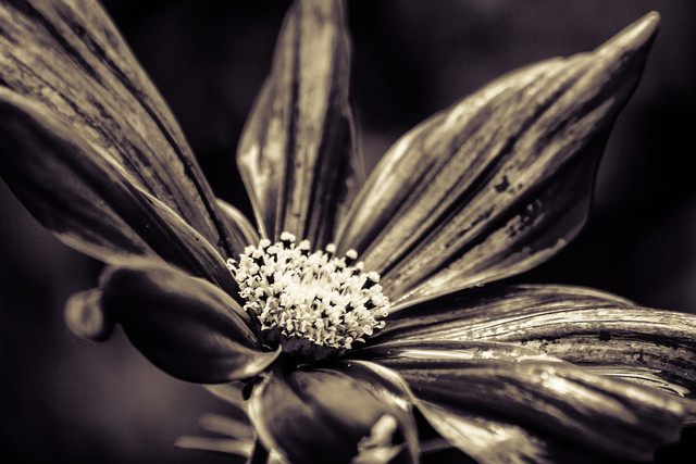 The blossom - Fineart photography by Markus Landsmann