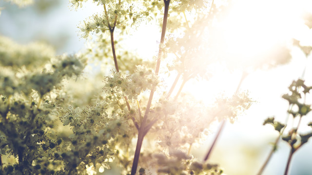 Summertime - Fineart photography by Torsten Muehlbacher