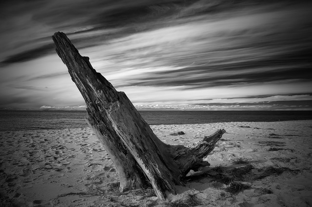 Totholz - Fineart photography by Oliver Buchmann