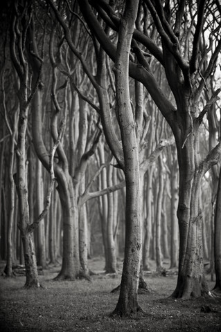 Baum #3 sw - Fineart photography by J. Daniel Hunger