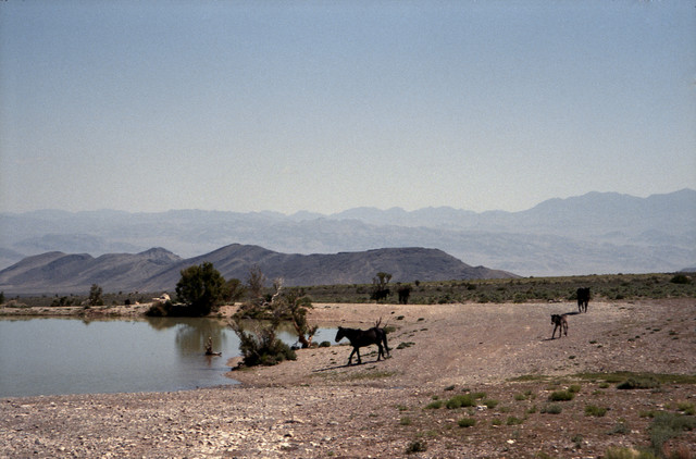 Horses at Waterhole - Fineart photography by Kevin Russ