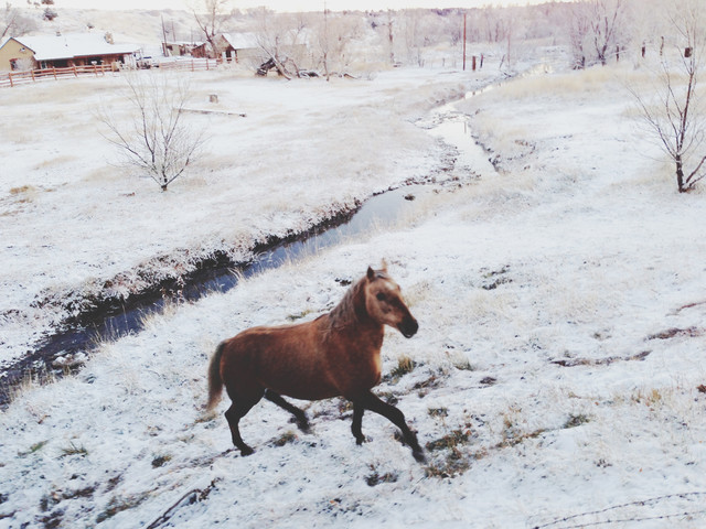 Winter Farm Horse - Fineart photography by Kevin Russ