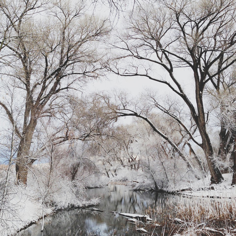 Winter Canopy - Fineart photography by Kevin Russ