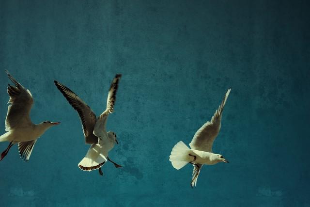 möwen - Fineart photography by Michaela Ertelt