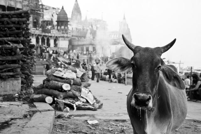 Eine Signatur-Szene des Glaubens in Varanasi Indien - Fineart photography by Jagdev Singh