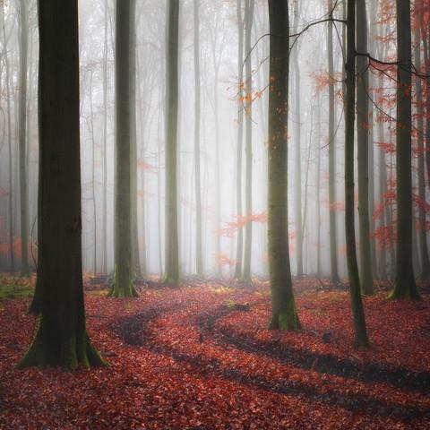 Tracks - Fineart photography by Carsten Meyerdierks