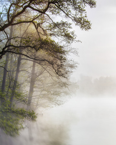 Foggy morning at the lake - Fineart photography by Jake Playmo