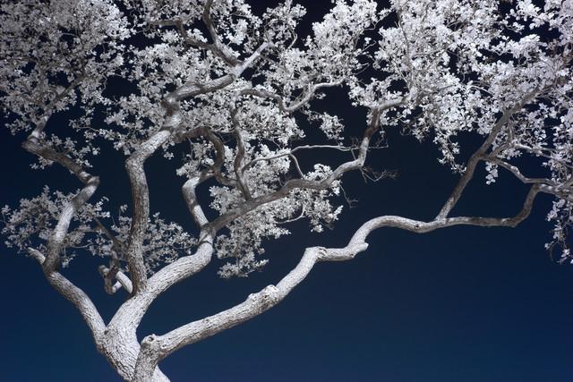 Bonsai - Fineart photography by Holger Nimtz