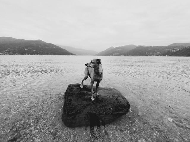 Seehundele! - Fineart photography by Christine Frick