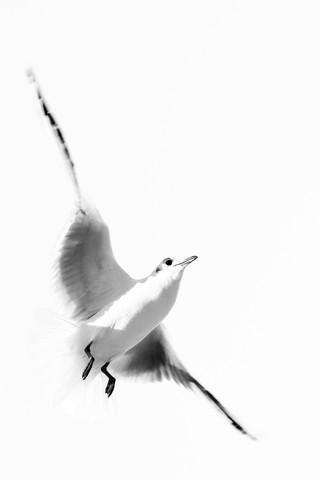 schwerelos - Fineart photography by Michaela Ertelt