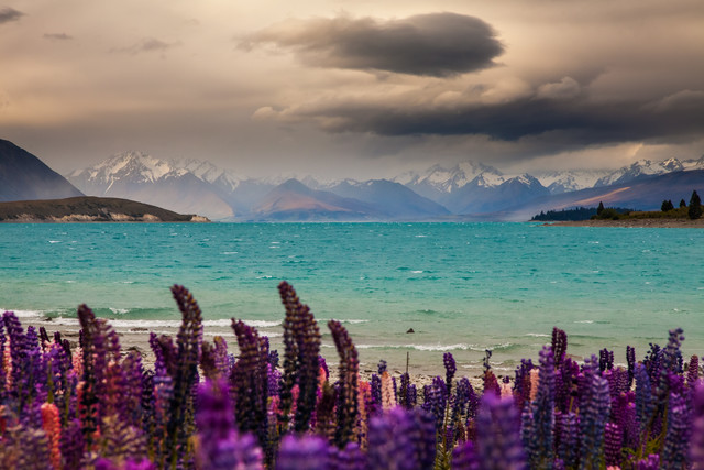 Lupins, clouds and Mt Erebus - Fineart photography by Felix Salomon