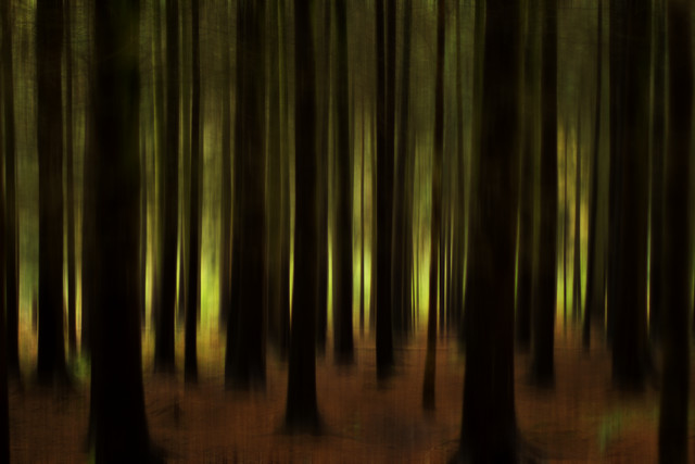 Im Wald - Fineart photography by Oliver Buchmann