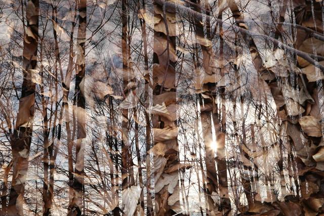 wood - Fineart photography by Rolf Bökemeier