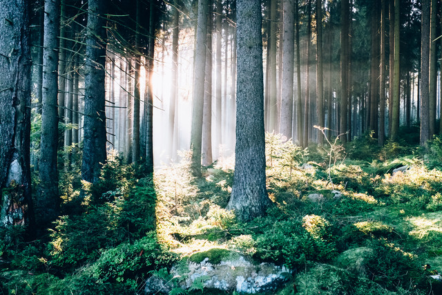 Waldspaziergang - Fineart photography by Andi Weiland