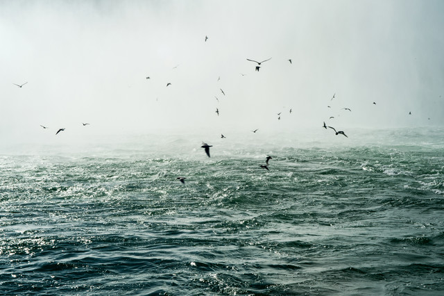 Niagara Falls - Birds - Fineart photography by Laura Droße