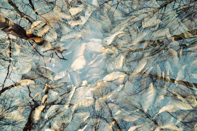 autumn - Fineart photography by Rolf Bökemeier