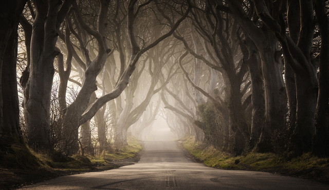 The Dark Hedges - Fineart photography by Carsten Meyerdierks
