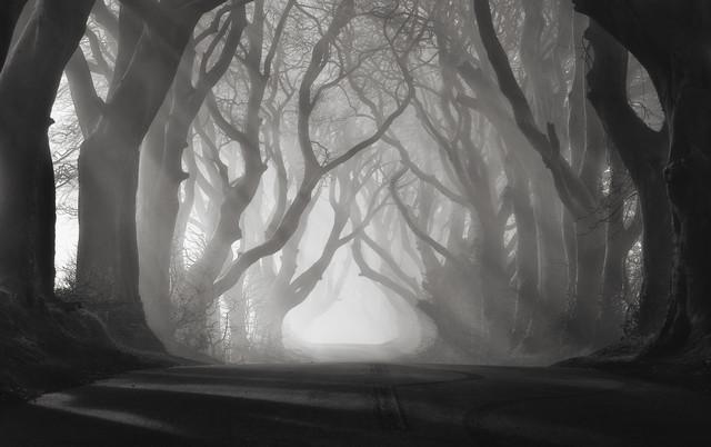 Rays Of Light - Fineart photography by Carsten Meyerdierks