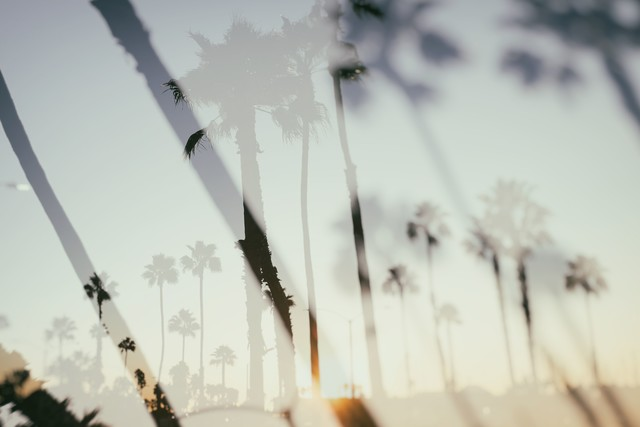 Double Tree Palms - Fineart photography by Roman Becker