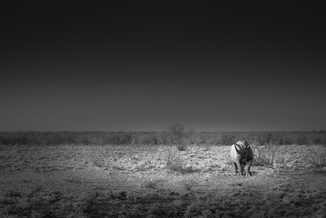 Lone rhino - Fineart photography by Tillmann Konrad