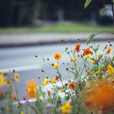 Summer flowers by the roadside - Fineart photography by Nadja Jacke