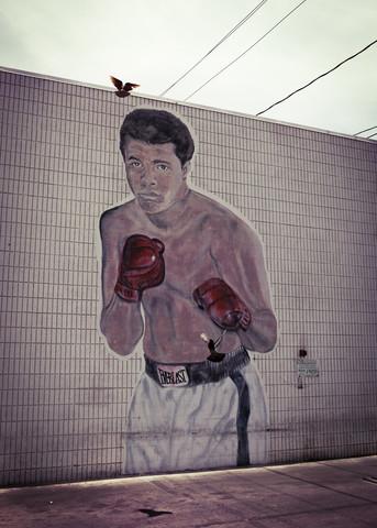 Ali vs pigeon - Fineart photography by Florian Büttner
