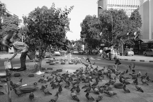 Pigeons - Fineart photography by Jagdev Singh