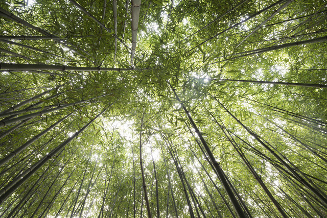 Bamboo - Fineart photography by Daniel Schoenen