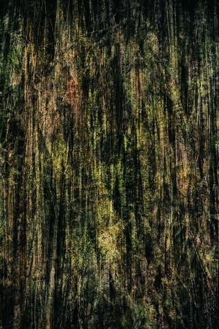 Fig tree - Australia - Fineart photography by Franzel Drepper