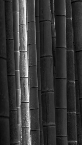 Mōsō - Study 2 - Japan - Fineart photography by Ronny Behnert