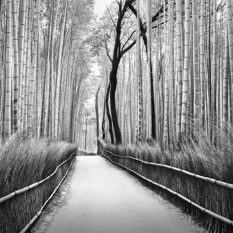 Ronny Behnert Arashiyama Bambuswald Kyoto Photocircle Net