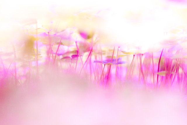 In the land of the enchanted lucky clover - Fineart photography by Un-typisch Verena Selbach
