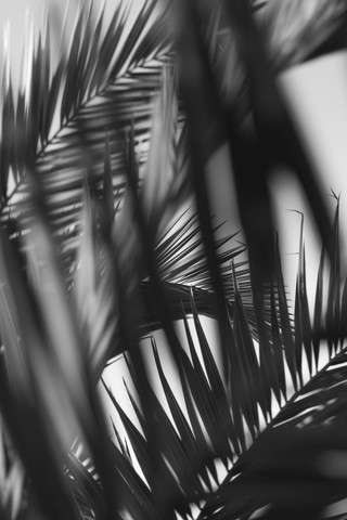 palm trees on a sunny day editing in black and white - Fineart photography by Nadja Jacke
