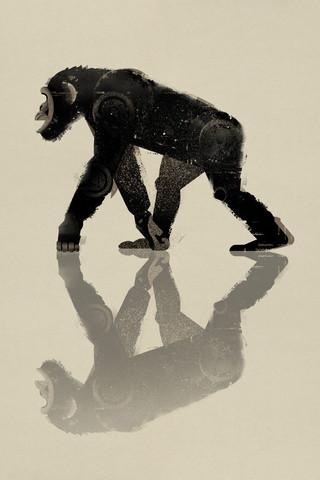 Chimpanzee - Fineart photography by Dieter Braun