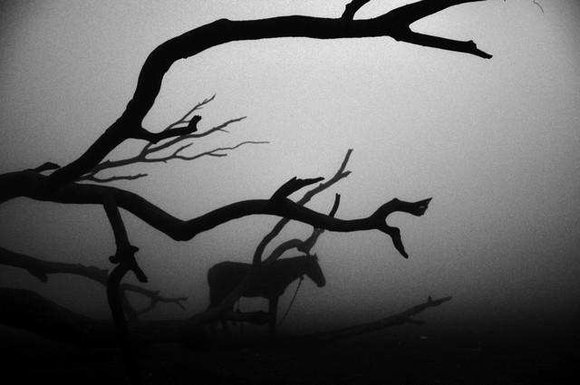 The horse in the fog - Fineart photography by Sankar Sarkar