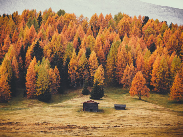 Army Of Larches - Fineart photography by Gergo Kazsimer