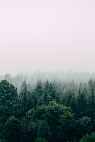 Foggy Forest - Fineart photography by Christian Hartmann