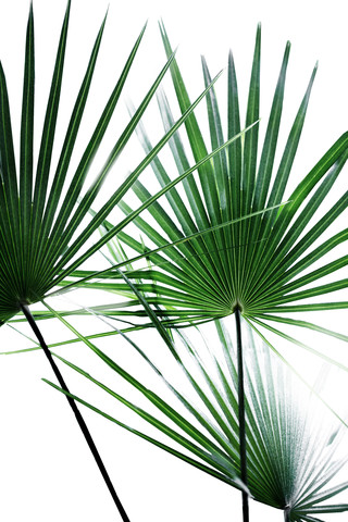 Palm Leaves 12 - Fineart photography by Mareike Böhmer