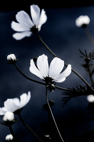 Wild Flowers 1 - Fineart photography by Mareike Böhmer