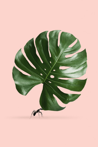 Monstera Ant - Fineart photography by Jonas Loose