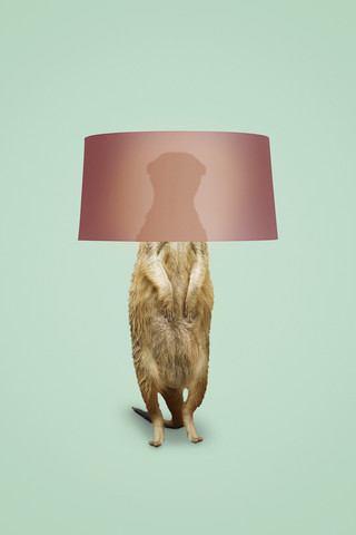 Meerkat Lamp - Fineart photography by Jonas Loose