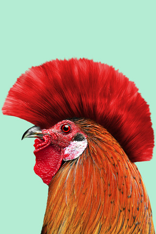 Punk Cock - Fineart photography by Jonas Loose