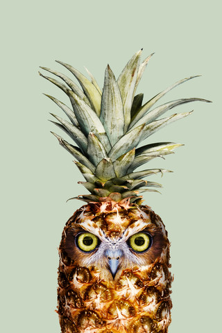 Pineapple Owl - Fineart photography by Jonas Loose