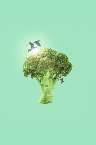 Broccoli - Fineart photography by Jonas Loose